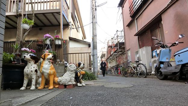 犬の日常_72