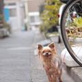 Photos: 待ってるよ