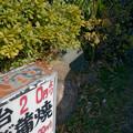 Photos: 2 0円より