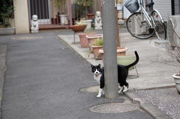 Photos: 電柱と猫