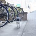 Photos: 駐輪場猫