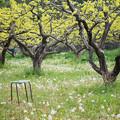 Photos: 椅子と綿毛