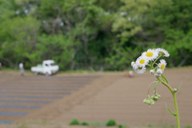 Photos: 畑風景