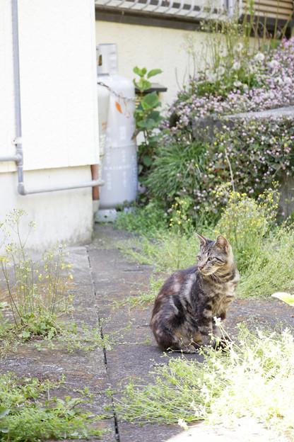 路地裏の猫