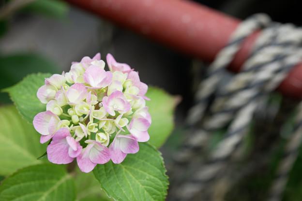 紫陽花のある現場
