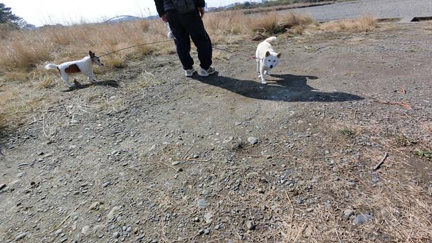 犬の日常_106