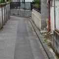 Photos: 路地の猫