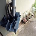 Photos: 鉢植と傘