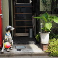 Photos: 犬とボール