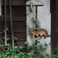 Photos: ブチ猫