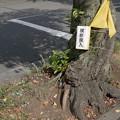 Photos: 横断旗