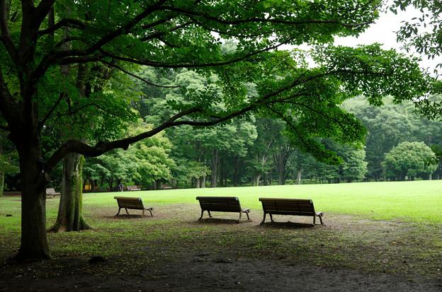雨あがりの公園