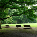 Photos: 雨あがりの公園