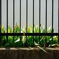 Photos: 柵の向こう
