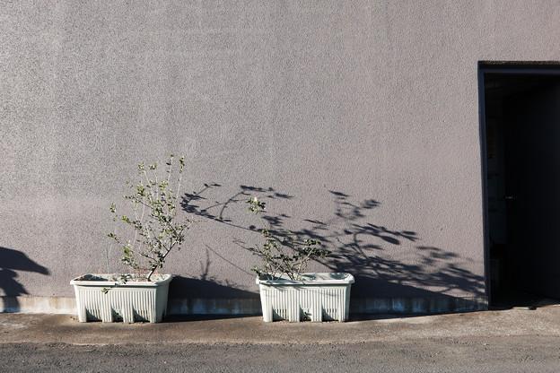 Photos: 鉢植と影