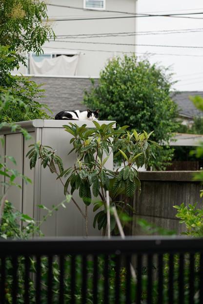 Photos: 物置の猫