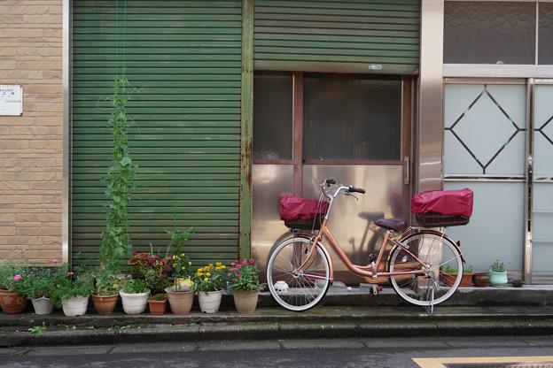 鉢植と自転車