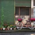 Photos: 鉢植と自転車