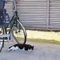 駐輪場の猫2