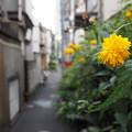 Photos: 路地の花