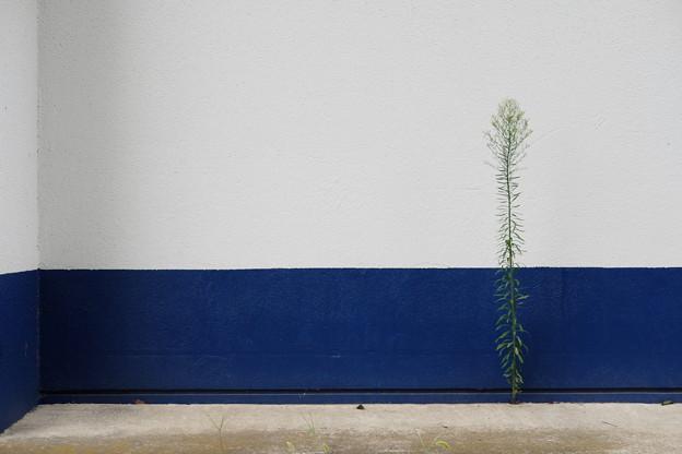 Photos: 壁ぎわに