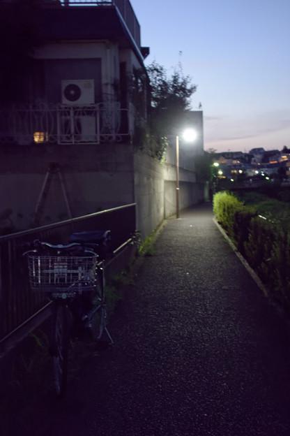 夜の遊歩道