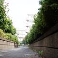 街猫の日々_02