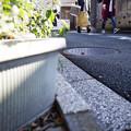 街猫の日々_05