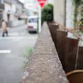 Photos: 街猫の日々_08