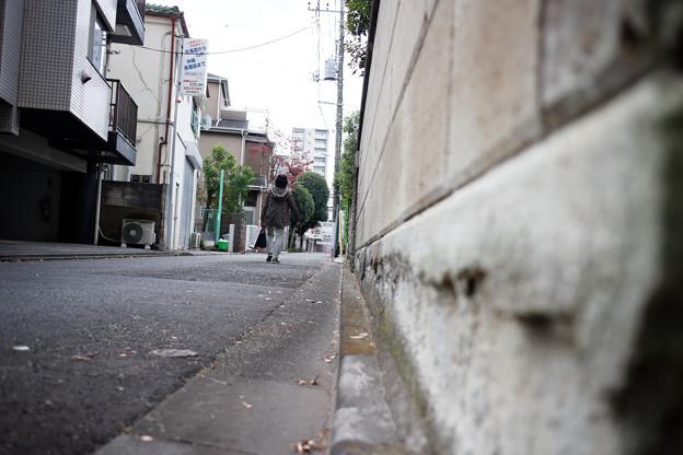 街猫の日々_09