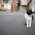 Photos: 路地猫