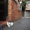 Photos: 番猫