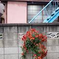 Photos: 花と階段