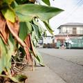 Photos: 街猫の日々_11