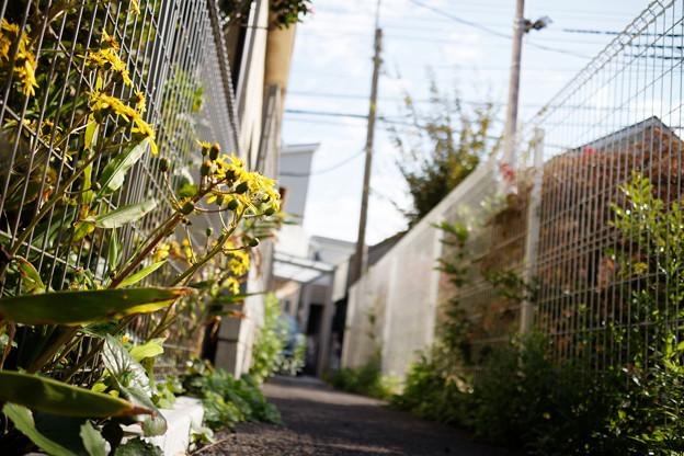 Photos: 街猫の日々_12
