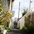 街猫の日々_12