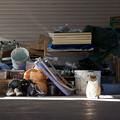 Photos: 日向の猫