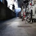Photos: 街猫の日々_13