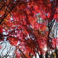 Photos: 紅に