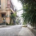 街猫の日々_16