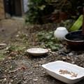 Photos: 街猫の日々_18
