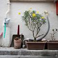 Photos: 黄色い花
