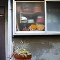 窓と鉢植え