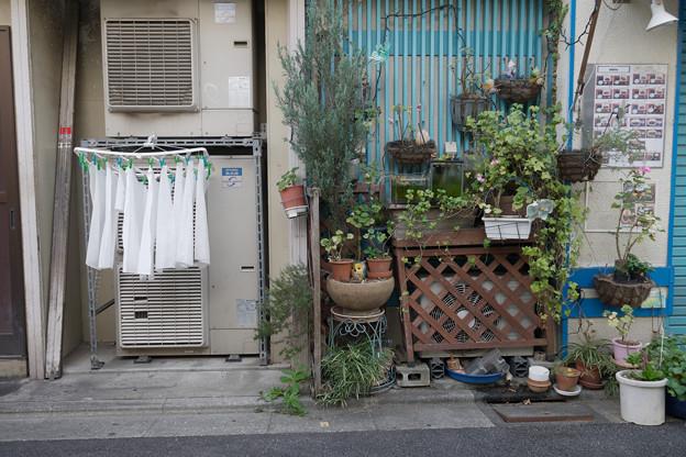 洗濯物と鉢植え