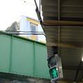 Photos: 青信号