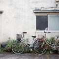 アロエと自転車