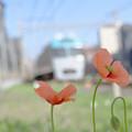線路わきの花