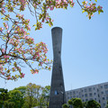 塔と花水木