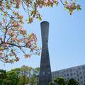 Photos: 塔と花水木