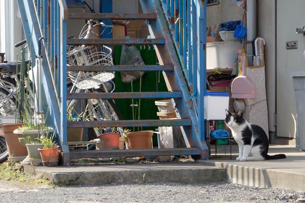 階段横の猫